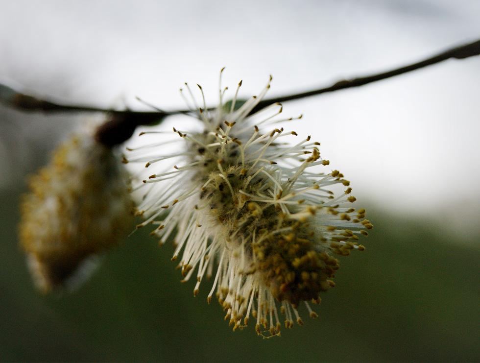 Spring Flora & Fauna